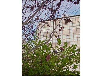 94300 - Vincennes - Lycée Privé Gregor Mendel